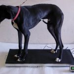700-LB-x-02-LB-44-x-22-Inch-Extra-Large-Platform-Vet-Veterinary-Animal-Livestock-Dog-Goat-Calf-Pig-Sheep-4H-Digital-Scale-NEW-0