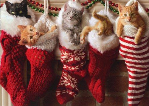 Avanti-Press-Christmas-Cards-Stocking-Full-of-Kittens-0