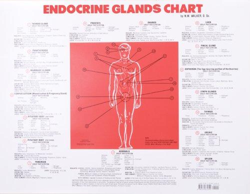 Endocrine-Glands-Chart-0