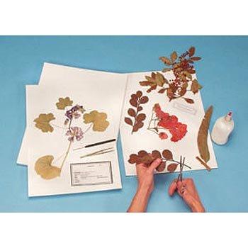 Herbarium-Mounting-Paper-100-Rag-0-0