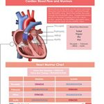 ScrubCheats-50-Laminated-Nursing-Reference-Cards-4X6-Fits-in-Scrub-Pocket-MedSurg-Critical-Care-Pharmacology-OBPeds-Respiratory-Cardiac-WATERPROOF-SPLASHPROOF-HOSPITAL-PROOF-0-1