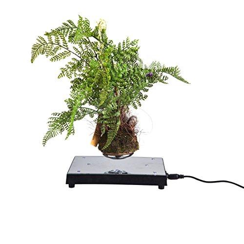 woodlev-8-LED-Magnetic-Maglev-Levitation-Levitron-Floating-Rotating-Holder-Stand-Mirror-Platform-Display-Up-to-350g-0-1